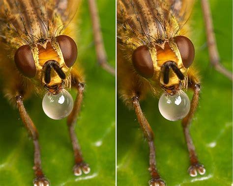imagenes 3d ojos cruzados imagenes en 3d sin lentes ojos cruzados mosca imagenes