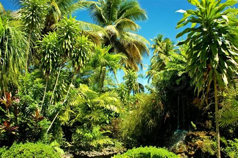 with palm tree island landscape scenery of a beautiful tropical island with