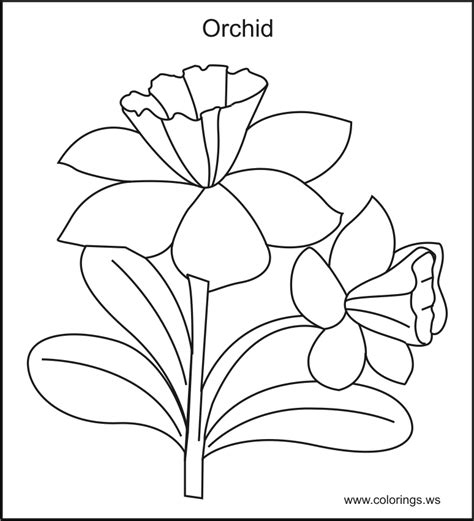 printable pictures of real flowers orchid coloring pages