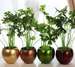 good houseplants ce plante sa cresteti ca sa aveti noroc