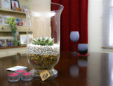 tall glass terrarium kit  large echeveria succulent