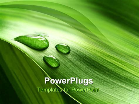Powerpoint Template A Background Of Green Plant Leaf With Water Drops 10157 Plant Powerpoint Templates Free