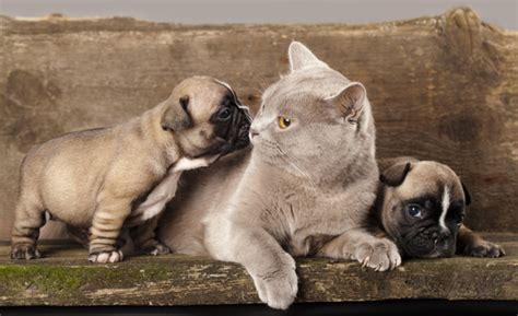 how to get cats and dogs to get along 9 ways to help cats and dogs get along better catster