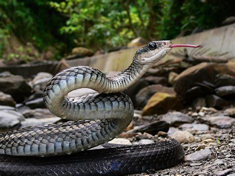 unnerving photographs  snakes stockvaultnet blog