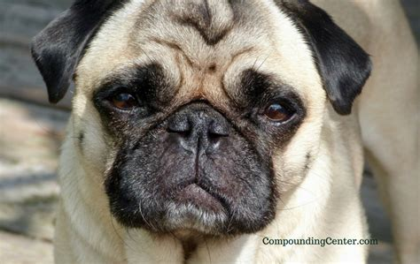 theophylline for dogs theophylline what to do about your coughing dogthe compounding center