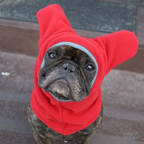 dogs ears are warm snorf industries launches kickstarter caign to keep dogs ears warm adorable