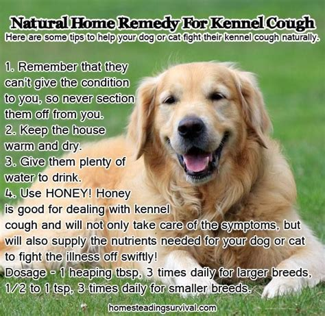 puppy kennel cough home remedies pin by layne rowland on family
