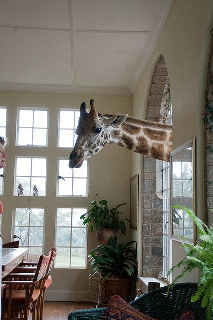 giraffe bedroom best 777 writing prompts images on pinterest education what would photo writing prompts and