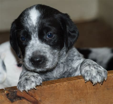 when is a not a puppy with dspca a is for not just for