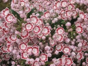 best flowering shrubs for new hshire landscapes