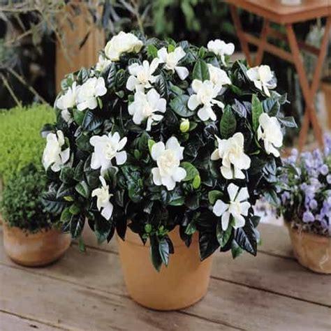 gardenie schnell und guenstig  kaufen meingartenshop