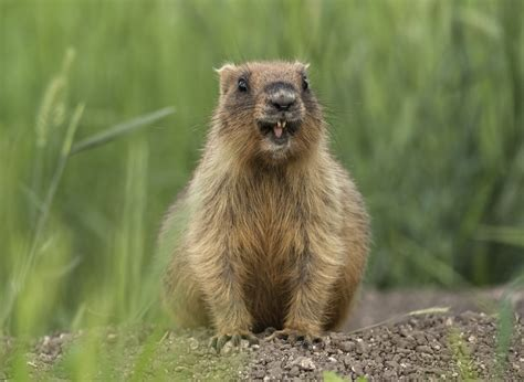 7 Reasons I Groundhog Day by Best Pest 10 Facts About Groundhog Day