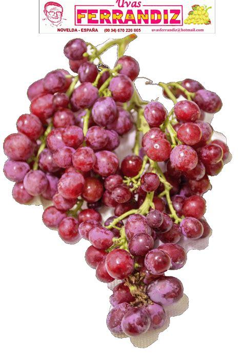 imagenes de uvas en hd uvas ferrandiz vendimia de la uva de mesa red globe