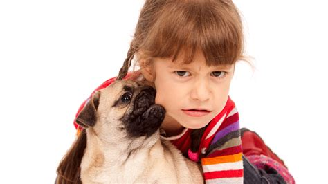 pug puppy biting learn how to supervise and dogs living with and dogs