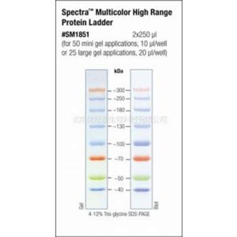 pageruler prestained protein ladder 26616 image of