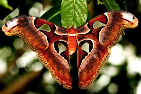imagenes de mariposas nocturnas insectos y ar 225 cnidos naturaleza curiosa