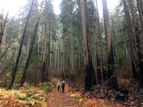 Trail damage mixed from Eagle Creek fire   Hood River News
