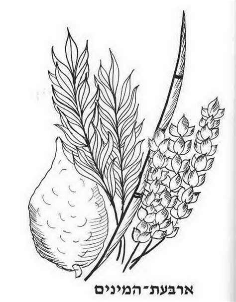 sukkot free jewish coloring pages for kids family