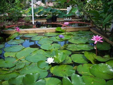 Water Garden Supplies by Water Garden Supplies Front Yard Landscaping Ideas