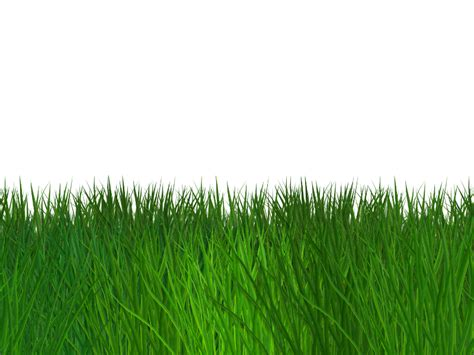 green wallpaper transparent border grass seamless transparent background free nature