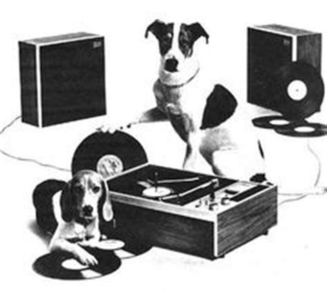 dj s dogs 1000 images about dj perro on dogs animals and animales