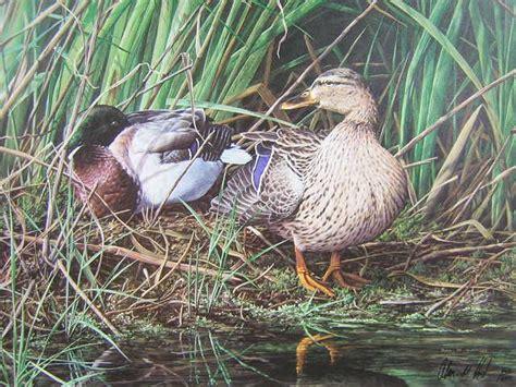 mary woodin england illustrator mallard ducks 99 best artist alan hunt images on pinterest animal