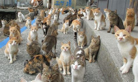 cat island japan japan s cat island finds purr fect solution to food crisis