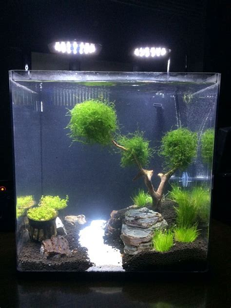 bamboo aquascape bamboo aquascape aquascape 5 gallon tank google search