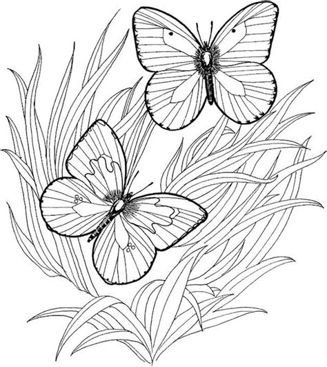 butterfly coloring pages for adults butterfly coloring page