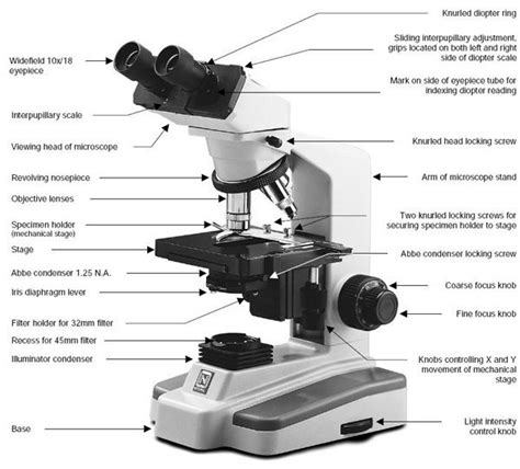 compound microscope diagram choosing a microscope make diy projects and ideas for