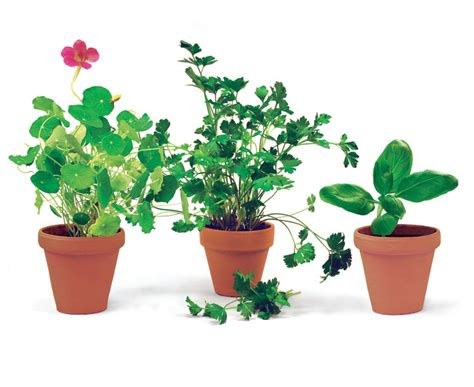 Planter Size by Six Superb Herbs For Containers Gardening