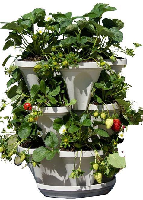 Self Watering Strawberry Planter by 25 Best Ideas About Strawberry Planters On Strawberry Planters Diy Strawberry