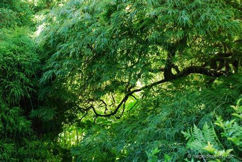 museum and tuinen van buuren brussel tuin van buuren museum magie des jardins