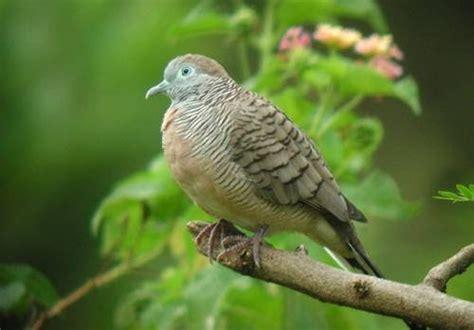 Tempat Makan Burung Perkutut peternak perkutut berkualitas perawatan perkutut di musim