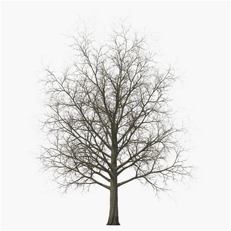 winter tree 3d model of maple tree winter