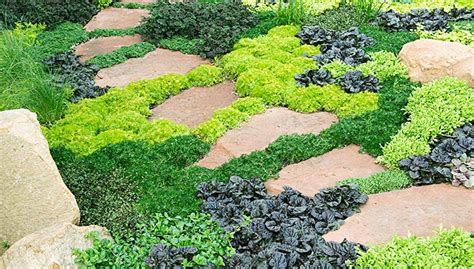 popular landscaping groundcovers and shrubs 6 ways to use groundcovers