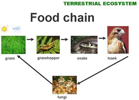 terrestrial food chain 17843   mediabin
