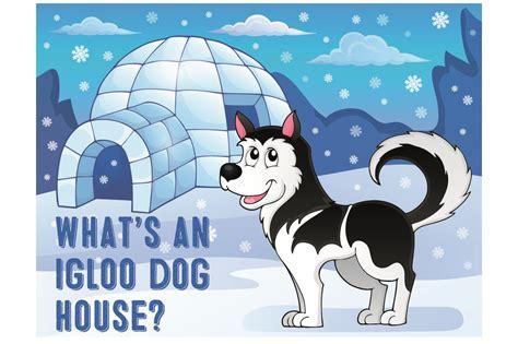used igloo dog house what s an igloo dog house my first shiba inu