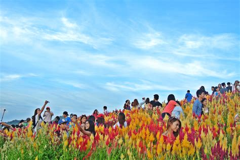 flower garden city the all new sirao flower garden in cebu all you need to