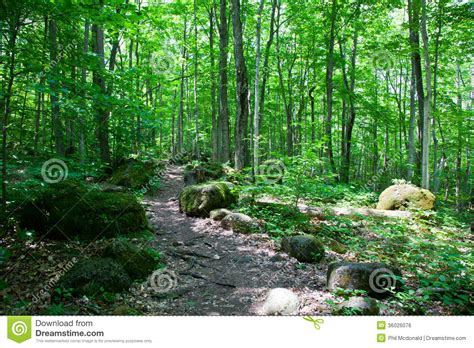 lush green forest path sunny wallpapers lush green pin green forest trail 1366x768 251888 1366x768jpg on