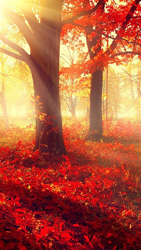 wallpaper park   wallpaper autumn beautiful
