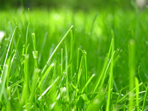 file grass closeup jpg