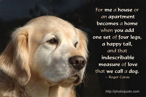 loving dogs your quotes