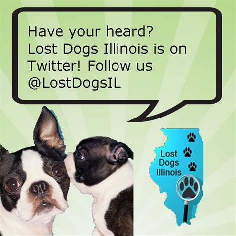 lost dogs illinois why are we all a lost dogs illinois