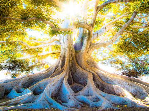 tree  life trinity prayer sun shining god jesus holy