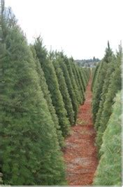 fox ridge tree farm