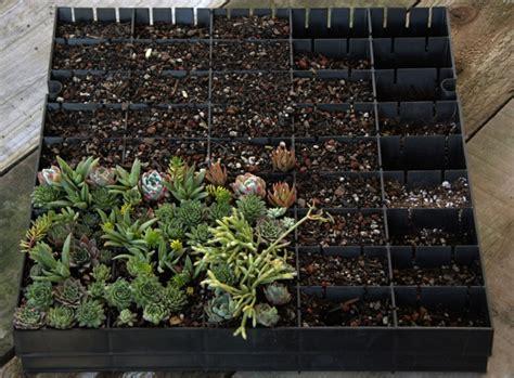 Vertikaler Garten Innen Diy by W 228 Nde Gestalten Mit Vertikalen Mini G 228 Rten Aus Sukkulenten