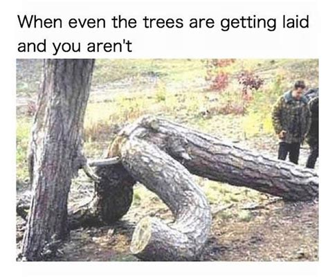 Tree Trunks Meme - tree trunks meme 28 images 25 best memes about wood