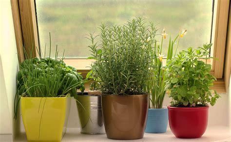 growing a winter garden how to grow a winter kitchen garden modern farmer