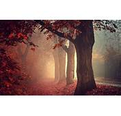 Red Forest Path Android Wallpapers For Free